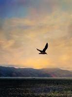 Bird Over Oyster Pond