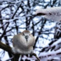Out on a Limb/Snowbird