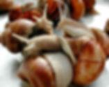 Conheça a criação de escargots