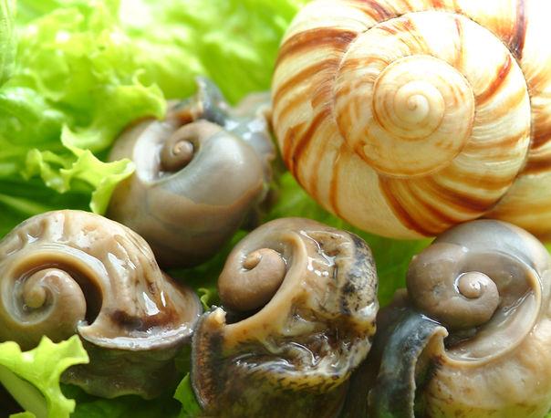 Carne fresca de escargots