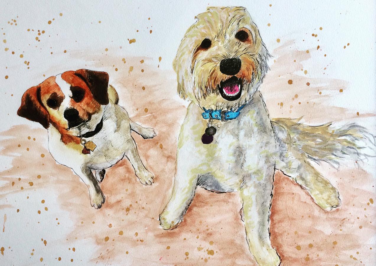 Shelley Dog Portrait