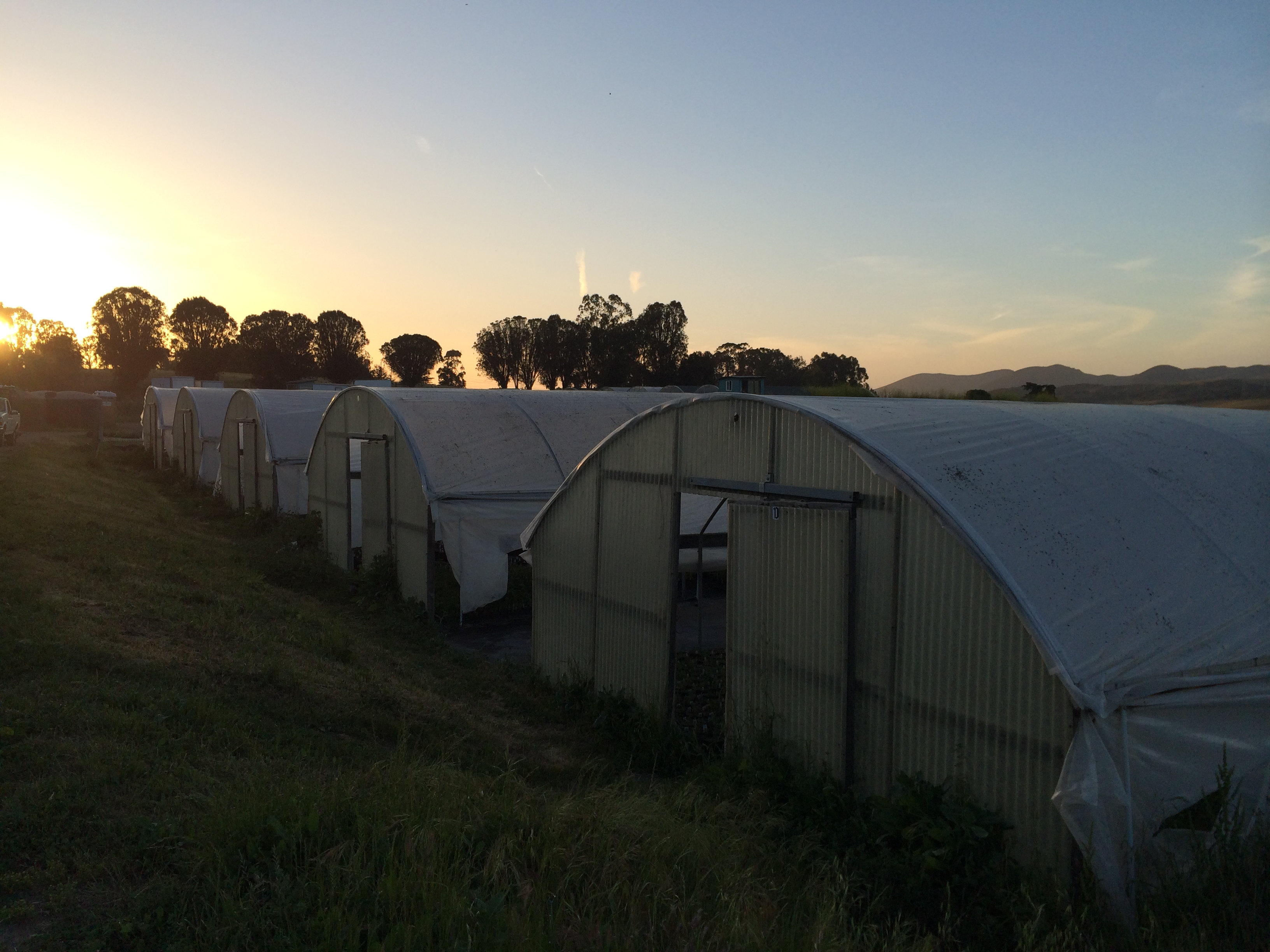 Greenhouses at dusk