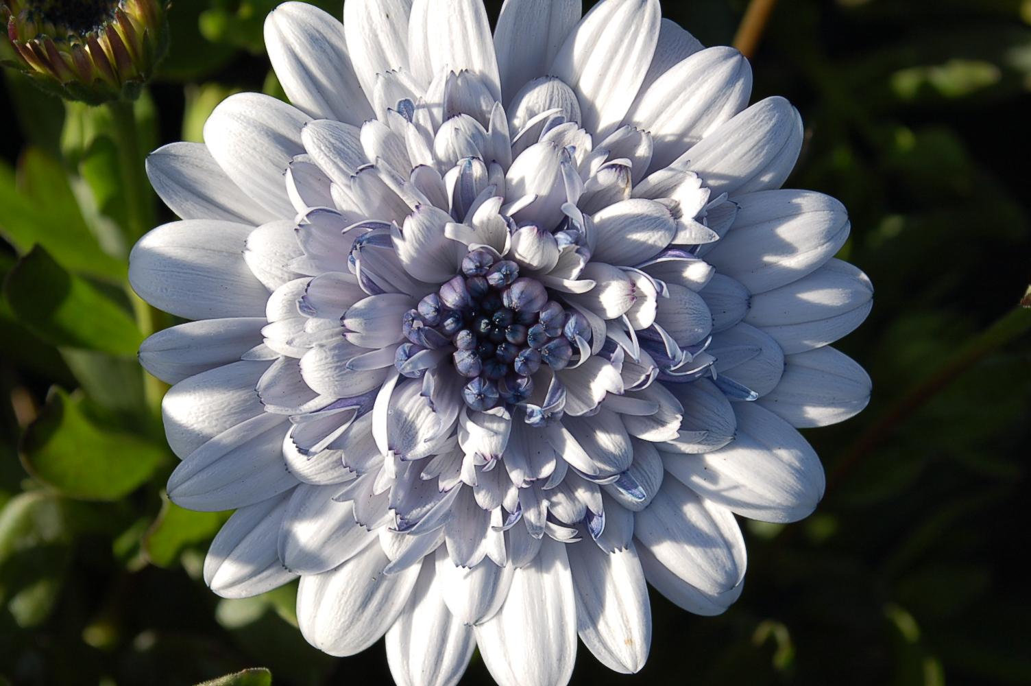 041919 SPRING FLOWERS 002