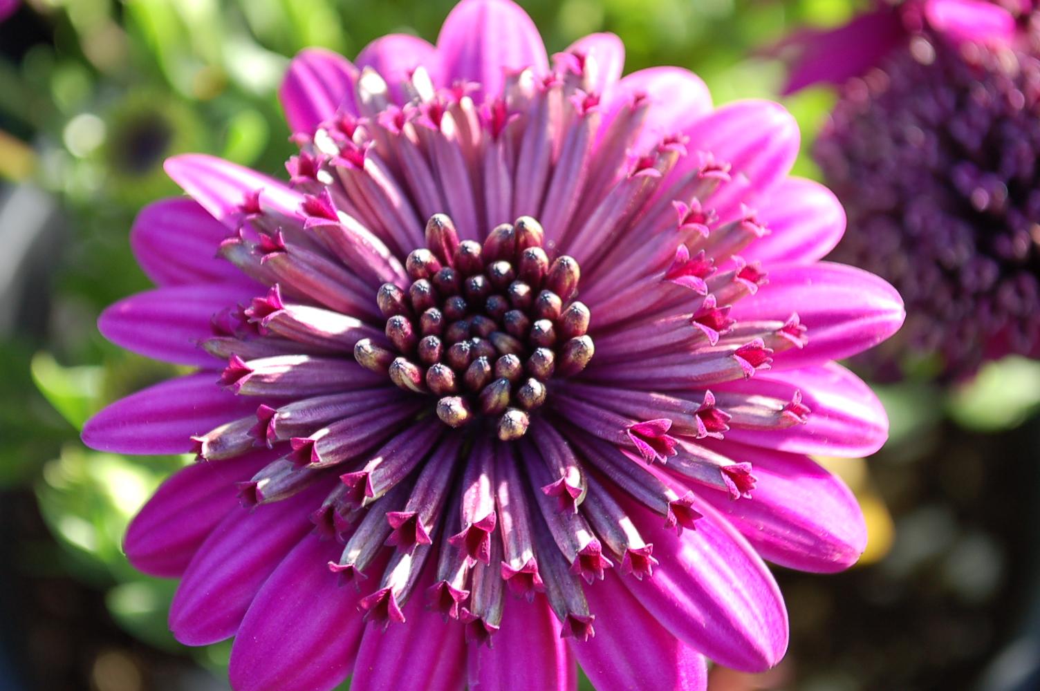 041919 SPRING FLOWERS 005