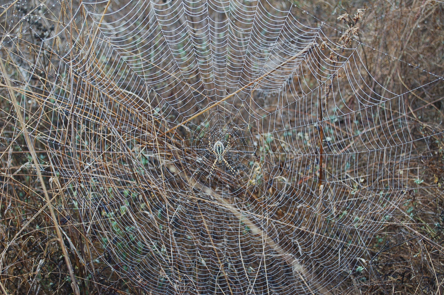 Spiderweb on a foggy morn