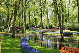 tulips-3583734_1920.jpg