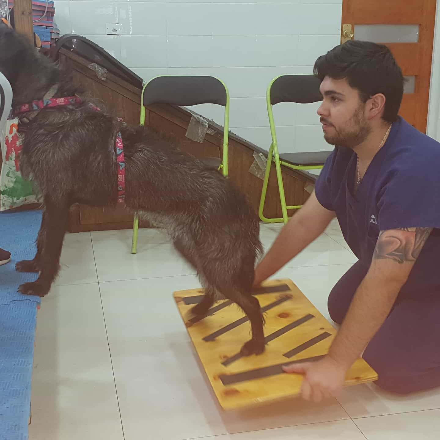 CENTRO PAWS 4 CARE; REHABILITACION ANIMAL