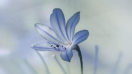 nature-3105635_640.jpg