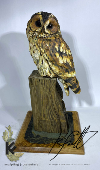 Tawny owl nice base 2.jpg