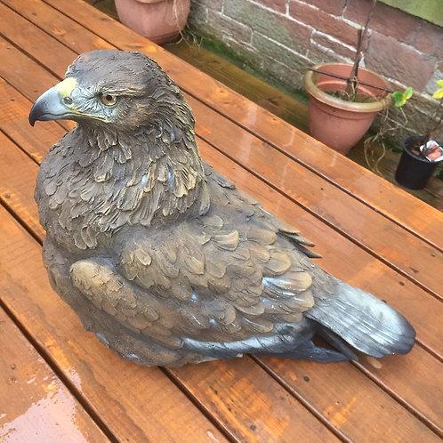Golden Eagle - sitting