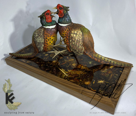 fighting pheasants 2.jpg