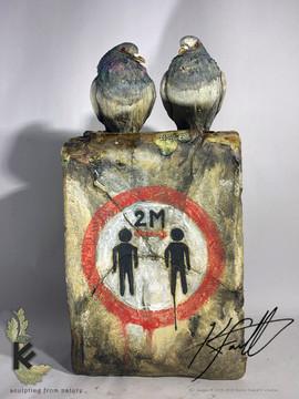 Social distance pigeons 3.jpg