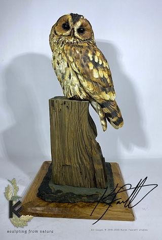 Tawny owl nice base 1.jpg