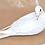 Thumbnail: White Dove