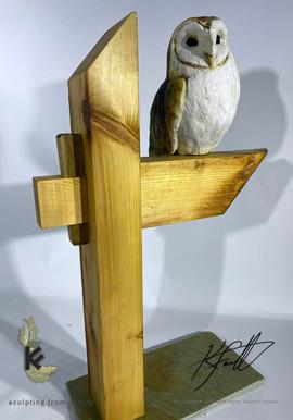BARN OWL ON BEAM 3.jpg