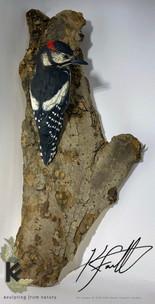 woody wood pecker 3.jpg