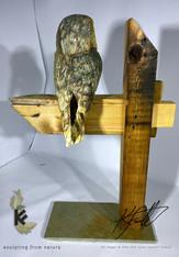 BARN OWL ON BEAM 4.jpg