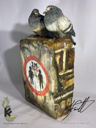 Social distance pigeons 1.jpg