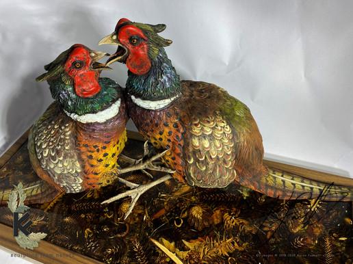 fighting pheasants 3.jpg