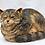 Thumbnail: Domestic Cat
