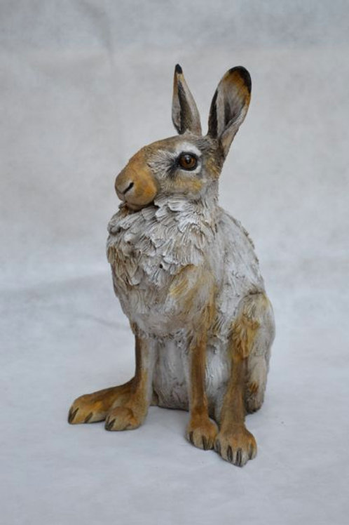 Adolescent Winter Hare