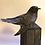 Thumbnail: Cuckoo