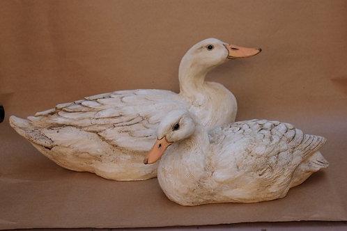 Aylsbury Duck