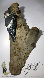 woody wood pecker 2.jpg