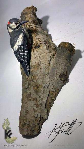 woody wood pecker 1.jpg