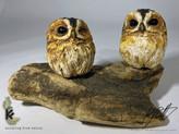 mini owl 2.jpg