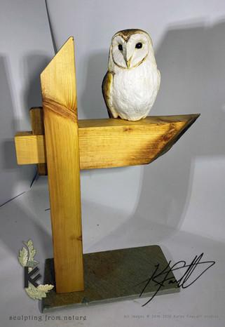 BARN OWL ON BEAM 1.jpg
