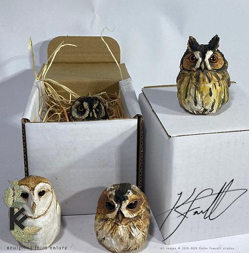 Mini owl in box
