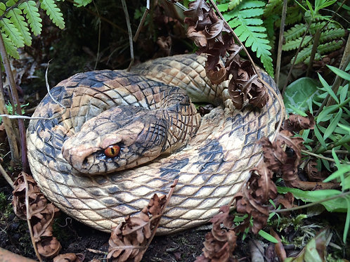 Adder (youngster)
