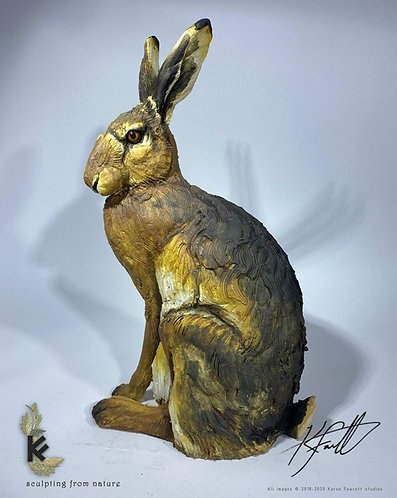 Adult Summer Hare