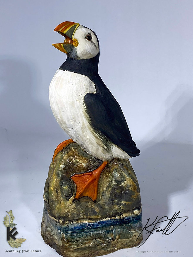 puffin for gallery 2.jpg