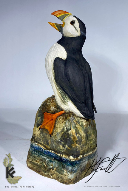 puffin for gallery 1.jpg