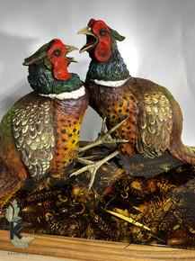 fighting pheasants 1.jpg