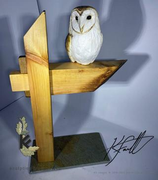BARN OWL ON BEAM 2.jpg