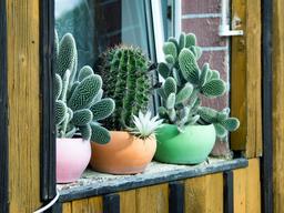 Plantas fáciles de cuidar para decorar tu casa