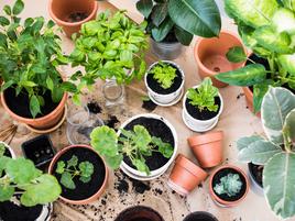 Plantas comestibles para cultivar en tu huerto urbano