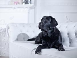 Decoración y mascotas en casa
