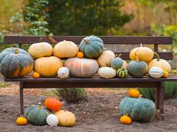 Trucos para preparar y mantener el jardín en otoño