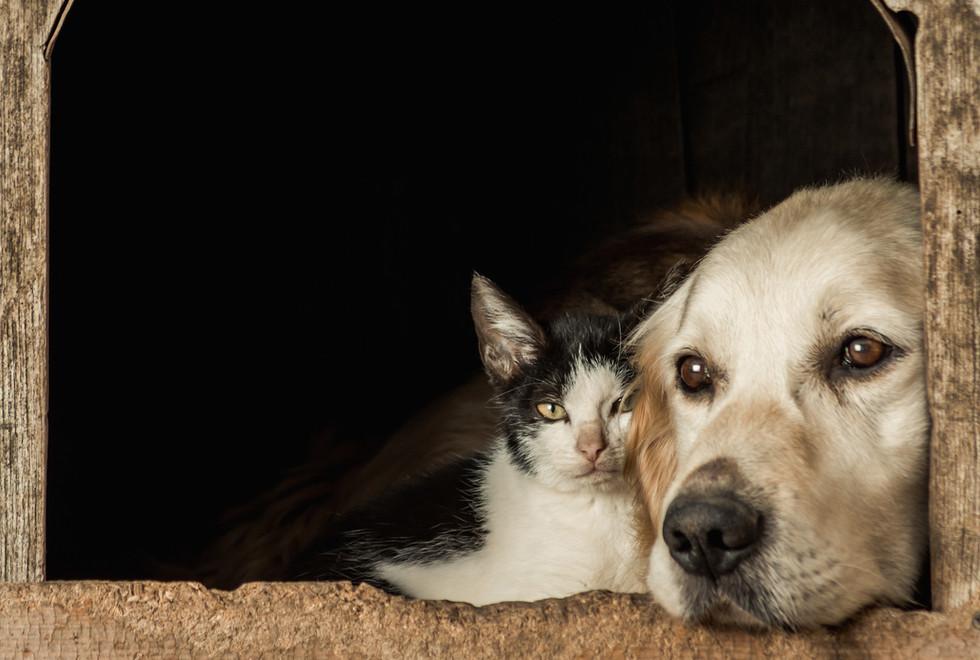 closeup-shot-snouts-cute-dog-cat-sitting