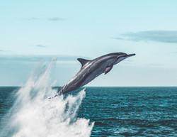 Evening Post Dolphin Main