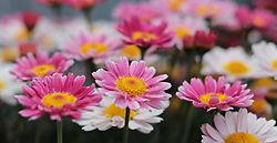 flowers-3357958_960_720.jpg