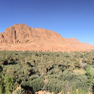 Palmerie panoramic