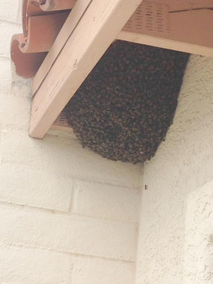 Eave hive
