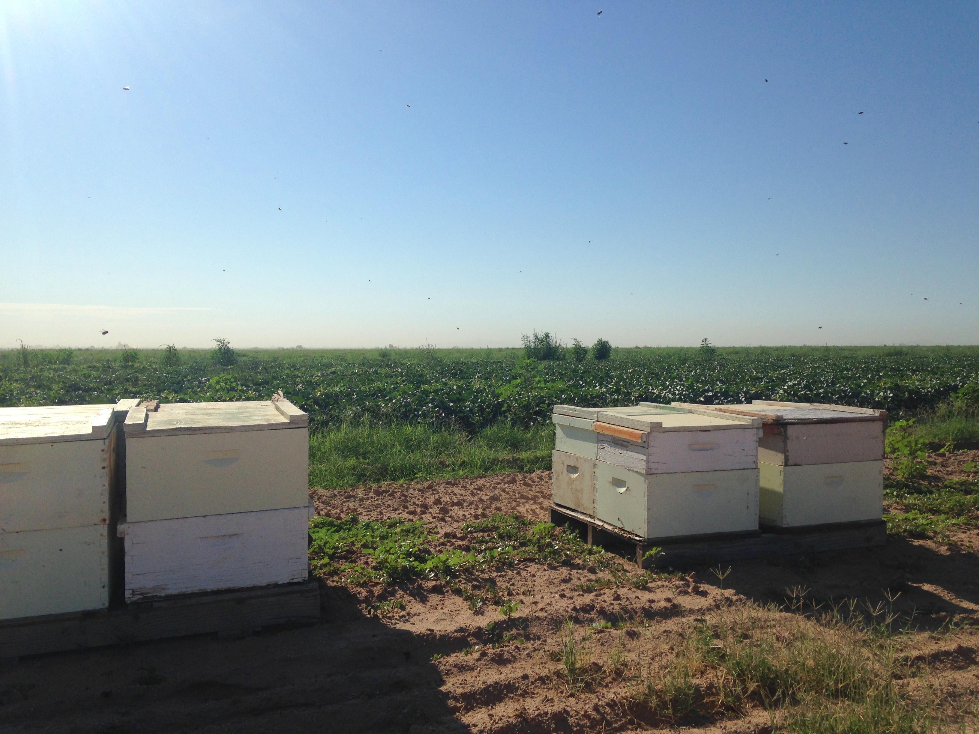 Melon Hives