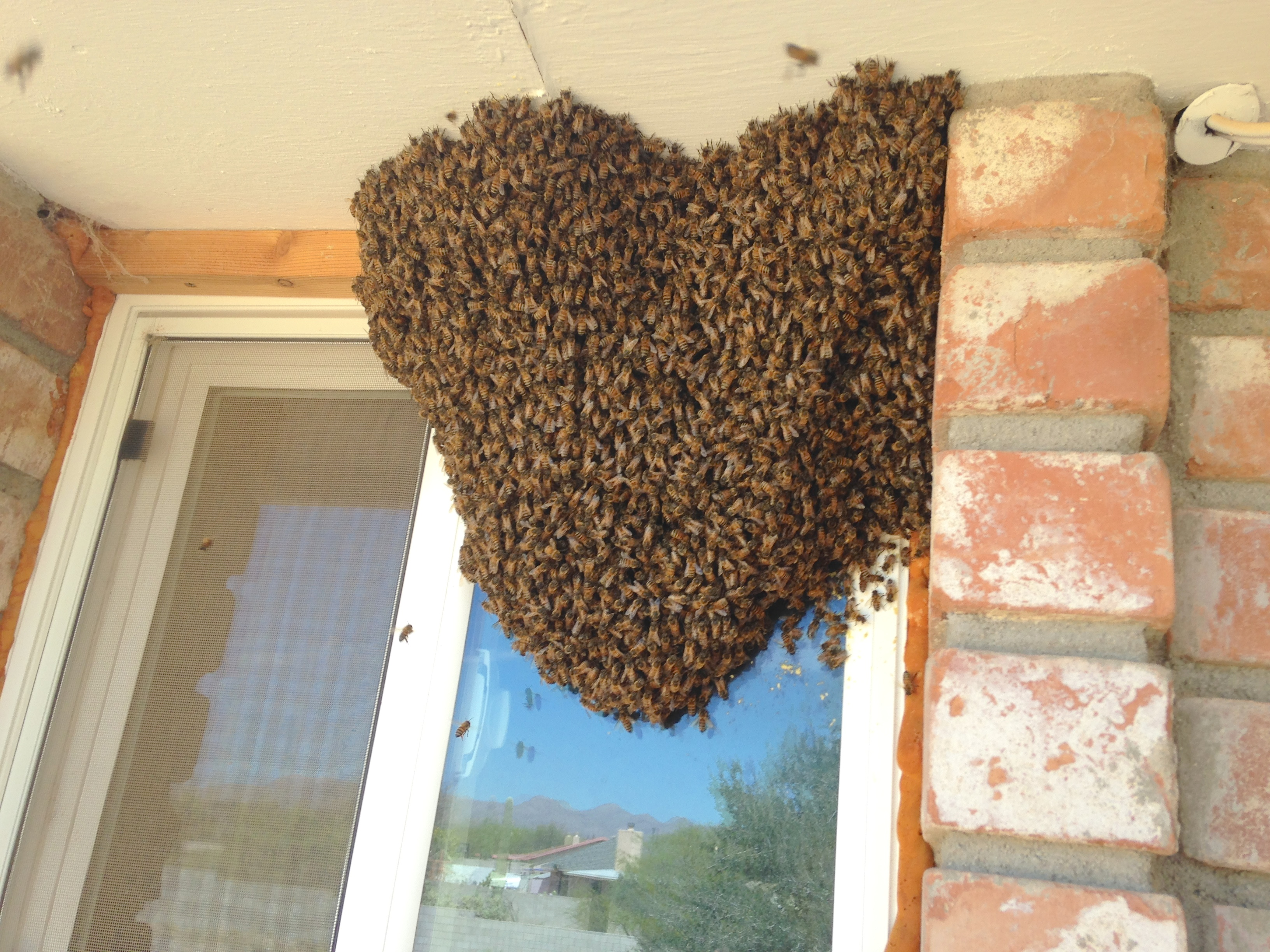 Window swarm