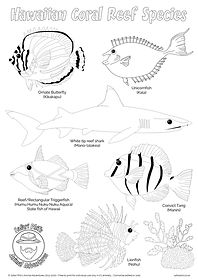 hawaiian coral reef species colouring sh
